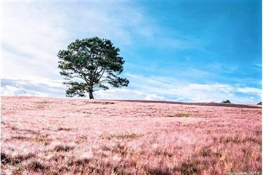 Pink Grass Hill - Snowy Hill